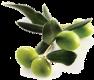 olive-branch-cluster-94x80