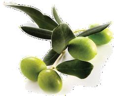 Biancolilla (Medium) Extra Virgin Olive Oil