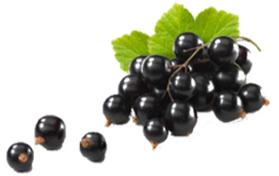 Black Currant Dark Balsamic