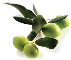 """Oro Bailen"" Picual Extra Virgin Olive Oil"